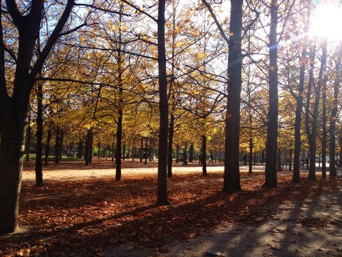 pardonmyparis_autumntrees_©jessimichelle
