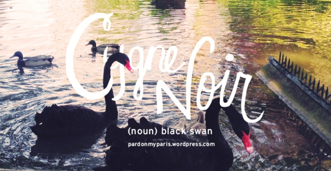 the daily french: cygne noir
