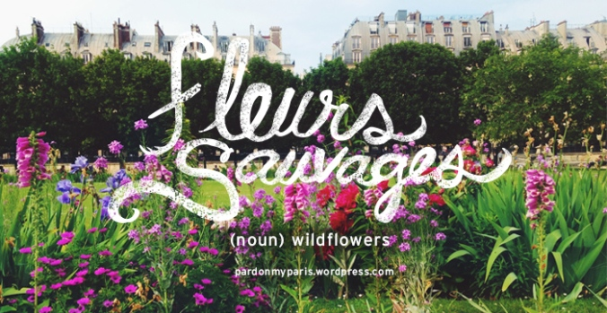 the daily french: fleurs sauvages
